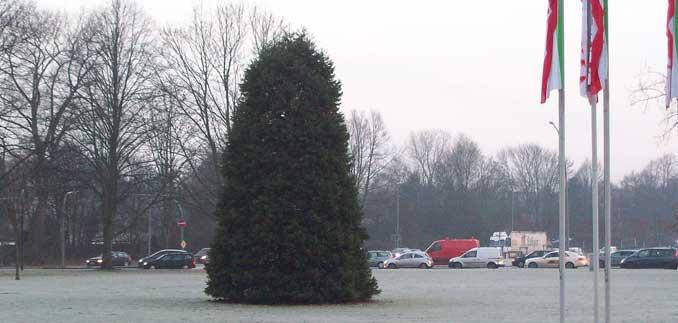 Tannenbaum am horner kreisel in hamburg hamburger allgemeine rundschau - Weihnachtsbaum kaufen hamburg ...