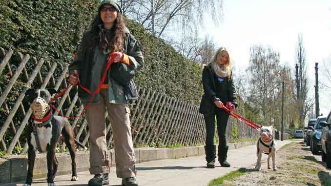Sardinienhunde Ev Auslandstierschutz Auf Sardinien